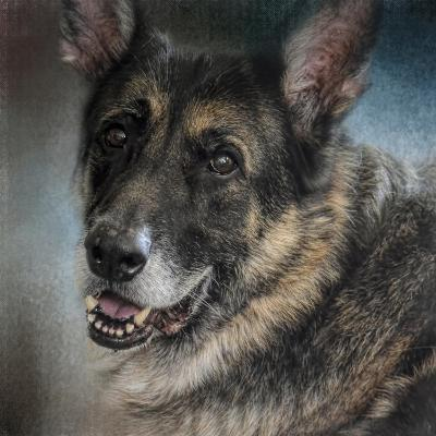 Portrait of a Shepherd-Jai Johnson-Giclee Print