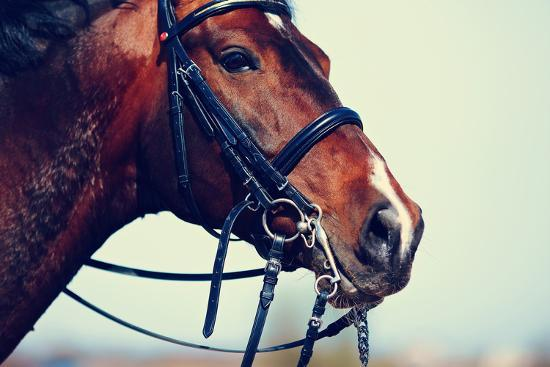 Portrait of A Sports Brown Horse.-AZALIA-Photographic Print
