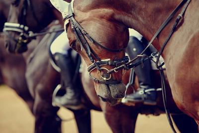 Portrait of a Sports Stallion. Riding on a Horse. Thoroughbred Horse. Beautiful Horse.-Elya Vatel-Photographic Print