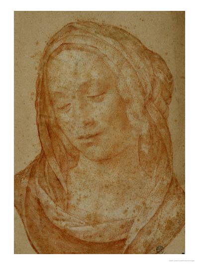 Portrait of a Woman with Veil-Lorenzo di Credi-Giclee Print