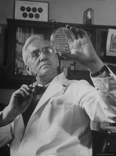 Portrait of Bacteriologist Alexander Fleming at Work-Alfred Eisenstaedt-Premium Photographic Print