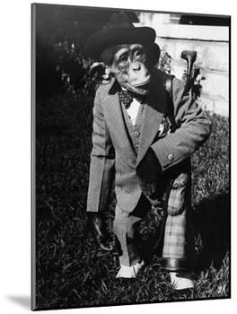 Portrait of Dressed- up Chimp-null-Mounted Photographic Print