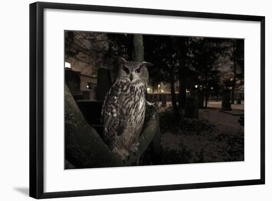 Portrait of Eagle Owl (Bubo Bubo) in Tree at Dusk. Freiburg Im Breisgau, Germany, January-Klaus Echle-Framed Photographic Print