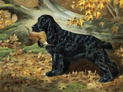 Portrait of English Cocker Spaniel Holding a Bird in its Jaws-Walter Weber-Photographic Print