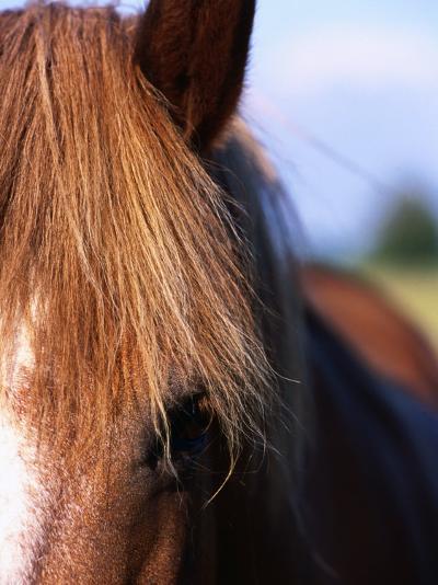 Portrait of Horse, Near Kragelund, Denmark-Holger Leue-Photographic Print