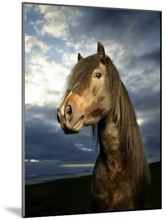 Portrait of Horse-Arctic-Images-Mounted Photographic Print