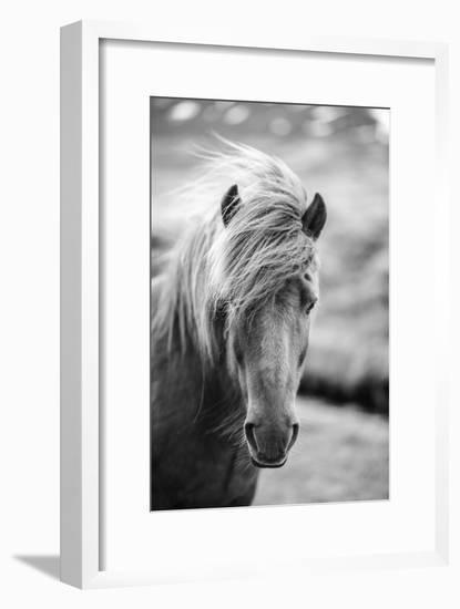 Portrait of Icelandic Horse in Black and White-Aleksandar Mijatovic-Framed Photographic Print
