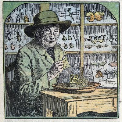 Portrait of Jean-Henri Fabre Entomologist-Stefano Bianchetti-Giclee Print