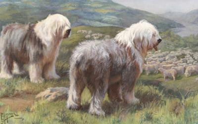 Portrait of Old English Sheepdogs Guarding a Flock of Sheep