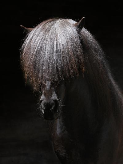 Portrait of Stallion-Arctic-Images-Photographic Print