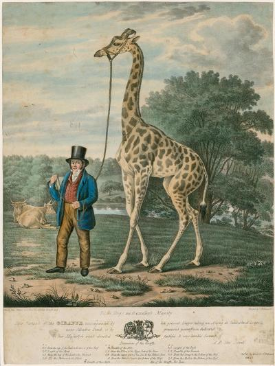 Portrait of the Giraffe, 1827-Abraham Bruiningh van Worrell-Giclee Print