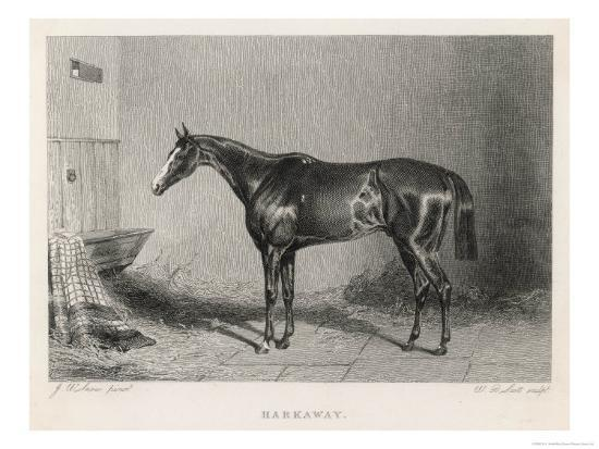 Portrait of the Racehorse Harkaway Who Won the 1838 Goodwood Cup in His Stable-W.b. Scott-Giclee Print