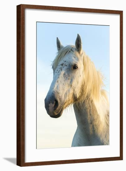 Portrait of White Horses Head, the Camargue, France-Peter Adams-Framed Photographic Print