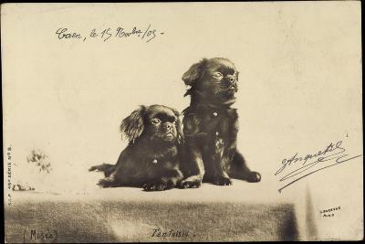 Portrait Von Zwei Hunden, Die Auf Einem Tisch Sitzen--Giclee Print