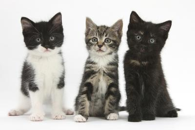 Portraits of Three Kittens-Mark Taylor-Photographic Print