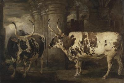 Portraits of Two Extraordinary Oxen, the Property of the Earl of Powis, 1814-James Ward-Giclee Print