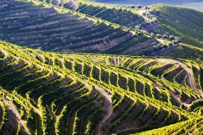 https://imgc.artprintimages.com/img/print/portugal-douro-valley-terraced-vineyards-lining-the-hills_u-l-q12t8970.jpg?p=0