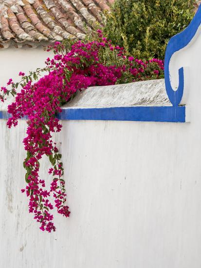 Portugal Obidos Beautiful Bougainvillea Blooming In The Town Of Obidos Portugal Photographic Print Julie Eggers Art Com