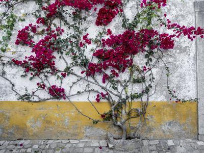 https://imgc.artprintimages.com/img/print/portugal-obidos-beautiful-bougainvillea-blooming-in-the-town-of-obidos-portugal_u-l-q1gaq6b0.jpg?p=0