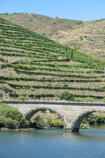 Portugal, Peredos Dos, Bridge and Vineyards Along Douro River-Jim Engelbrecht-Photographic Print