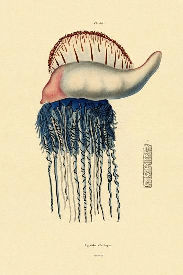 Portuguese Man-Of-War, 1833-39--Giclee Print