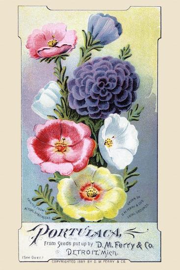 Portulaca--Art Print