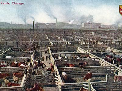 Postcard Depicting the Stock Yards and Abattoirs in Chicago, c.1910--Photographic Print