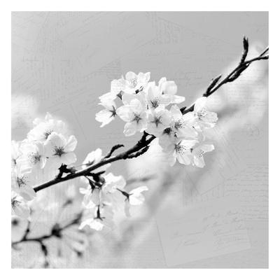 https://imgc.artprintimages.com/img/print/postcard-magnolia-2_u-l-f93sb10.jpg?p=0