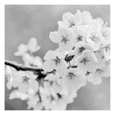 https://imgc.artprintimages.com/img/print/postcard-magnolia-3_u-l-f93sb20.jpg?p=0