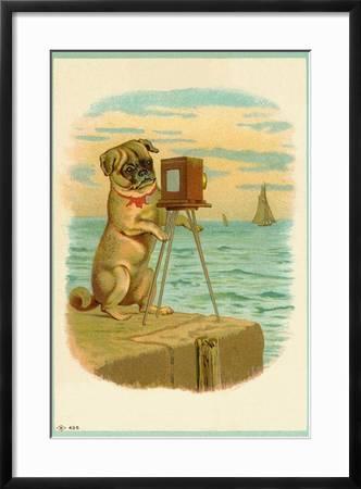 Pug with Cat Funny Postcard Animal Postcard Postcard Pug Greeting Card by Edition Colibri 10503