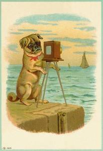Postcard with a Pug and Camera