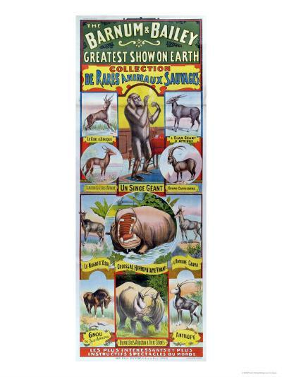 Poster Advertising the Collection de Rares Animaux Sauvages For the Barnum and Bailey Circus--Giclee Print