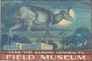 Poster for Field Museum with Horned Antelope