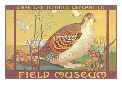 Poster for Field Museum with Quail--Art Print