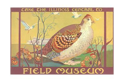 Poster for Field Museum with Quail--Giclee Print