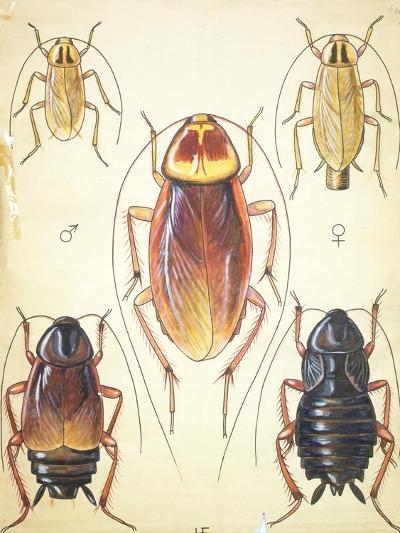 Poster of Household Insects--Giclee Print