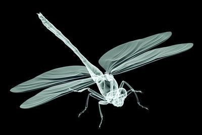 Xray Image of an Insect Isolated on Black with Clipping Path. 3D Illustration.