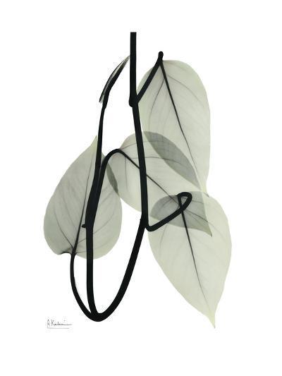 Pot Hos Leaf Portrait-Albert Koetsier-Art Print
