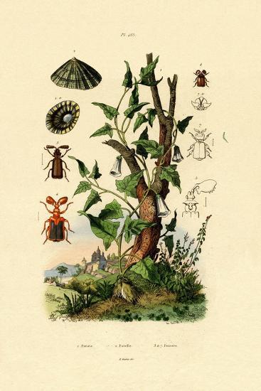 Potato, 1833-39--Giclee Print
