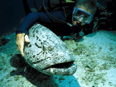 Potato Cod with Diver-Georgette Douwma-Photographic Print