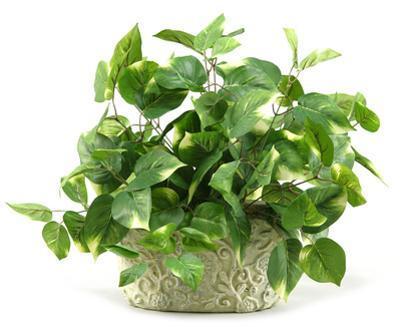 Pothos Ivy Planter