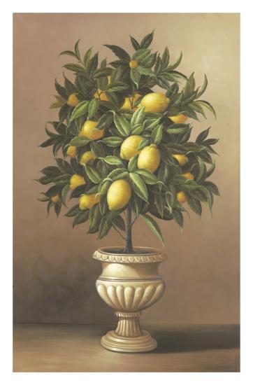 Potted Lemon Tree Art Print Welby Art Com