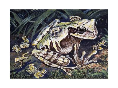 Pouched Frog (Gastrotheca Ovifera), Hemiphractidae, Drawing--Giclee Print