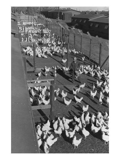 Poultry Farm-Ansel Adams-Art Print