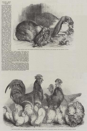 Poultry Show at the Crystal Palace-Harrison William Weir-Giclee Print