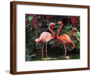 Flamingo Couple by pr2is