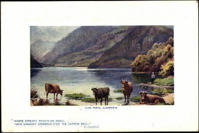Präge Künstler Llyn Peris, Llanberis, Kühe Am Flussrand--Giclee Print