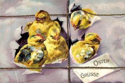 Präge Litho Frohe Ostern, Küken Schlüpfen Aus Paket--Giclee Print