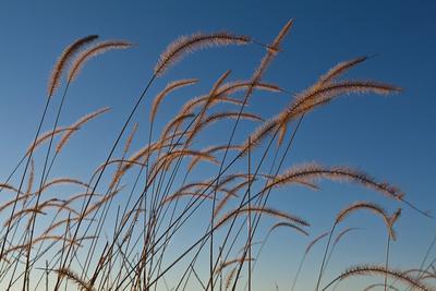 https://imgc.artprintimages.com/img/print/prairie-grass-landscape_u-l-q1beb4f0.jpg?p=0