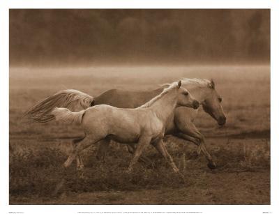 Prairie Run-Robert Dawson-Art Print